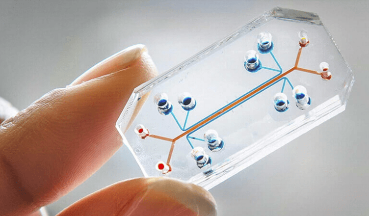ViewPoints Article: Organs on a chip (OOCs) – Transforming Animal Testing