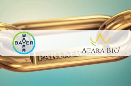Bayer Signs an Exclusive Worldwide License Agreement with Atara for Mesothelin-Targeted CAR T-cell Therapies to Treat Solid Tumors